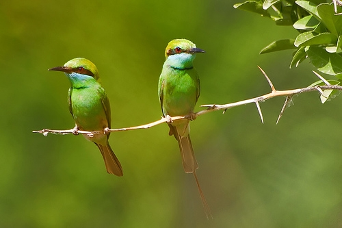 birds and green image