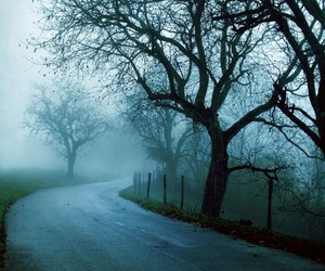 tree, road, and cold image