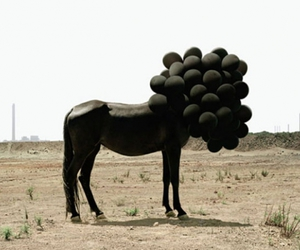 horse, balloon, and surrealism image