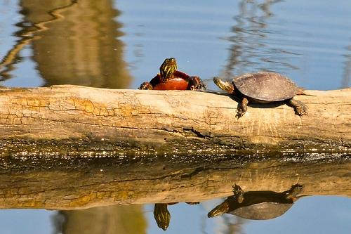 ducks, nature, and natureza image