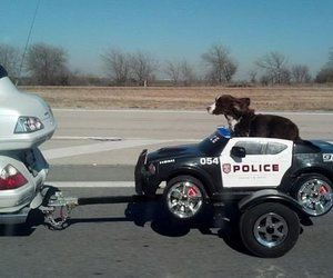 funny picture, cute police dog, and dog picture image