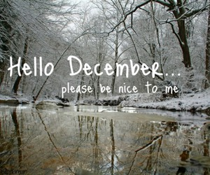 december, forest, and image image