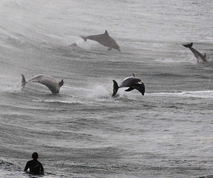 dolphin and sea image