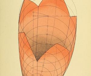 botanical, geometry, and graphics image
