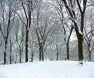 blizzard, Central Park, and footprints image