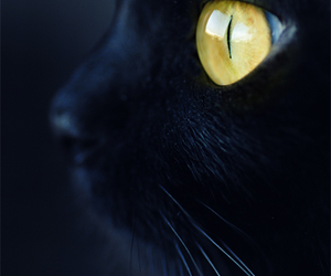 cat, black, and eyes image