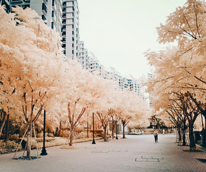 tree, city, and nature image