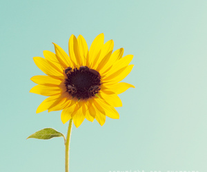 50mm, flower, and canon image