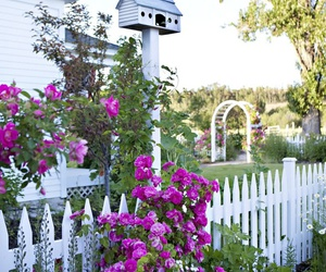 amazing, beautiful, and fence image