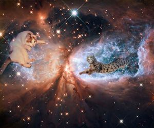 cats, pretty, and space image