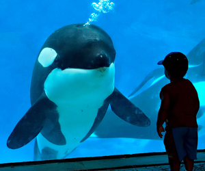 boy, free willy, and heather image