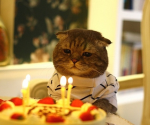 cat, birthday, and cake image