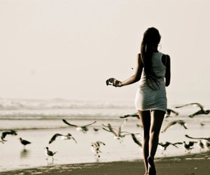 aves, be free, and beach image