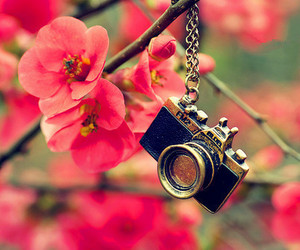 flowers, camera, and pink image