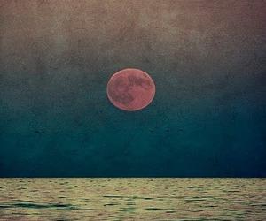 moon, sea, and bird image