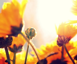 flowers, photo, and sunlight image