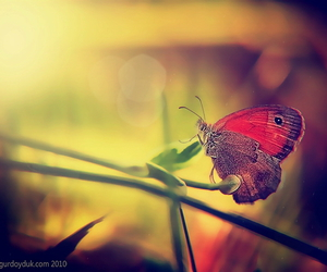 butterfly, sensual, and sunlight image