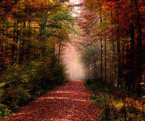 autumn, germany, and nature image