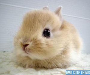 so cute, bunny, and cute bunny image