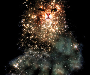 cat, stars, and space image