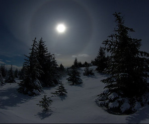 moon, night, and pines image