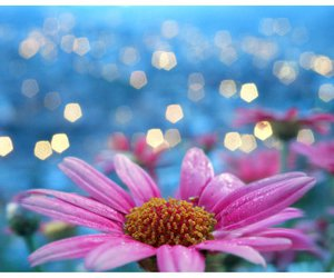 bokeh, flower, and pink image
