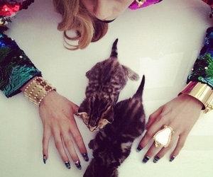 cat, fashion, and kitten image