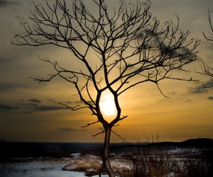 sunset and tree image