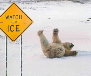 ice, funny, and Polar Bear image