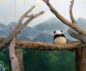 panda and lonely image