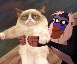 lion king, funny, and cat image
