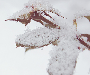 cold, leaves, and nature image