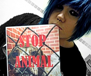 animals, blue, and emo image