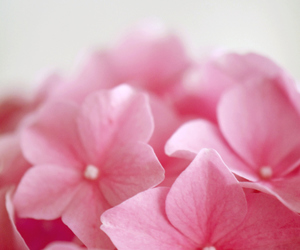 flower, flowers, and lovely image