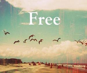 free, bird, and freedom image