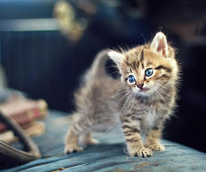 beautiful, cute animals, and cats image