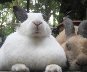 bunnies, rabbit, and cute image