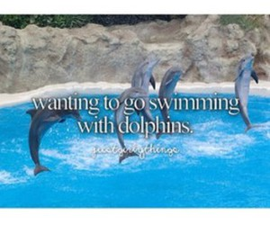 animal, beautiful, and dolphins image