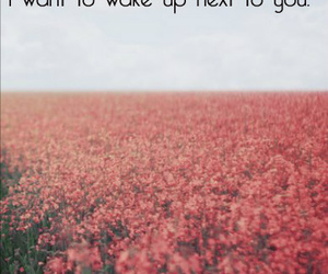 quotes, sayings, and wake up image