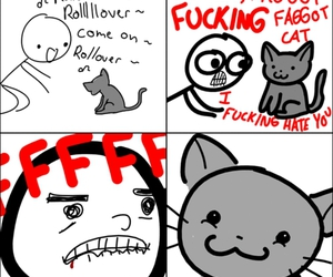 cat and funny image