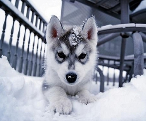 snow, dog, and cute image