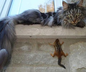 cat, funny animals, and funny cat image