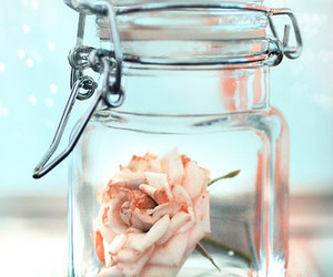 rose, flowers, and glass image