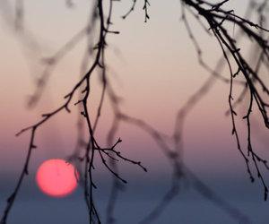 tree, sun, and photography image