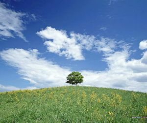 blue, field, and tree image