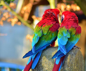bird, parrot, and animal image