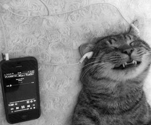 cat, music, and funny image