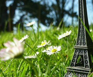 daisy, paris, and eiffel tower image