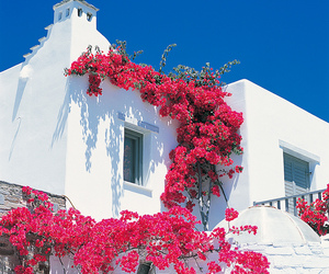 flowers, Greece, and house image
