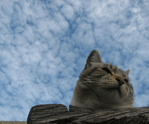 blue sky, cat, and cloudy image
